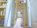ladder final
